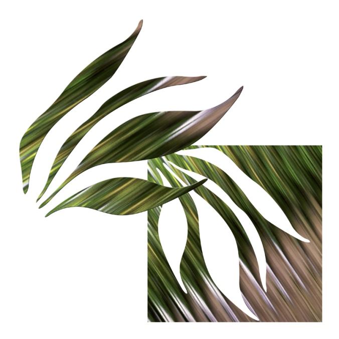Folhas-da-Janela